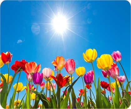 Frühlingsgrüsse von Yogaforyou :-)